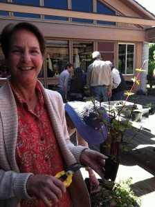 Judy Orsini