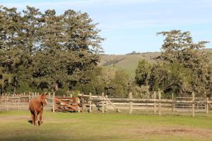 A Morgan horse enjoys the sun right before feeding time at the Morgan Horse Ranch. Photo by Molly Oleson.
