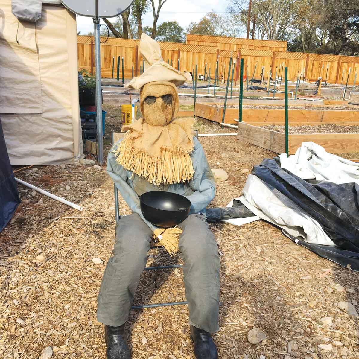 Marijuana Scarecrow