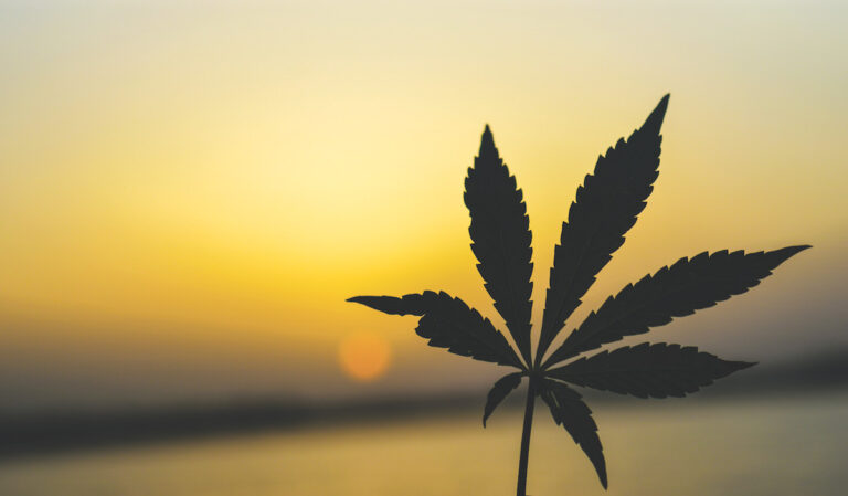 Best Reasons to Love the Marin Alliance for Medical Marijuana and Lynnette Shaw
